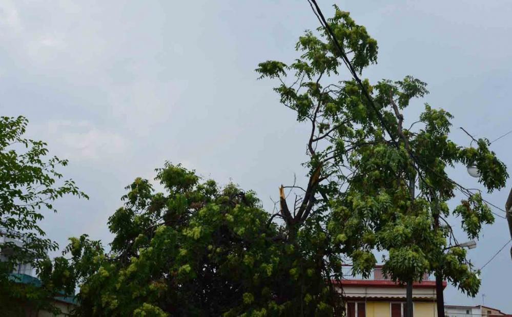 Πτώση δένδρου στην Κερασούντος