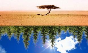 Ιδού το δάσος, ιδού και το δένδρο